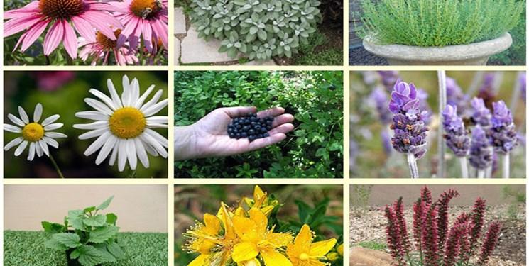 سهم ۱۳ میلیون دلاری گیاهان دارویی در صادرات استان اصفهان