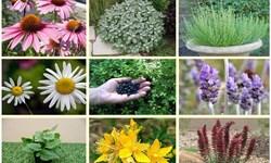 ۱۴۵ قرارداد توسعه کشت گیاهان دارویی در سمنان امضا شد