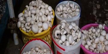 چهارمحال و بختیاری ششمین تولیدکننده قارچ خوراکی در کشور است