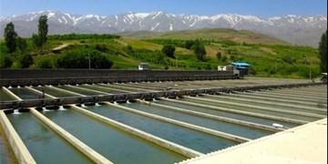 فعالیت ۳۸ مزرعه و تولید سالانه ۲ هزار و ۲۰۰ تُن ماهی سردآبی در بروجرد