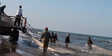 رهاسازی ۵۰۰ هزار قطعه بچه ماهی در دریای خزر برای افزایش تولید ماهی استخوانی