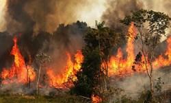 زنگ خطر آتشسوزی در جنگلهای کهگیلویه و بویراحمد/برای حفاظت از سرمایههای استان تدابیری اندیشیده شده است؟