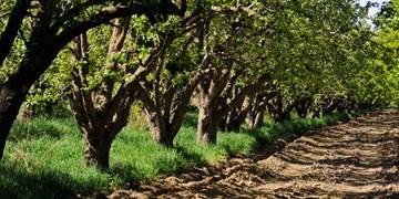 قیمت تولیدکننده زراعت، باغداری و دامداری 32.9 درصد گران شد