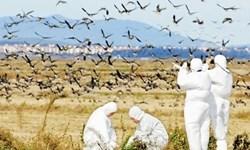 سمنان از نظر شیوع آنفلوآنزای فوق حاد پرندگان پاک است