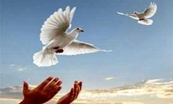 آزادی ۱۵۸۴ زندانی جرائم غیرعمد در فارس