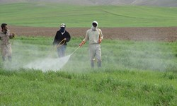 بررسی آثار نامطلوب استفاده غیر اصولی سمومی شیمیایی در کشاورزی و آثار زیان بار آن