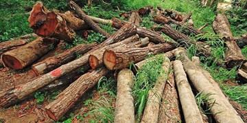 هشدار نسبت به  قطع بیرویه درختان در شهرستان ورزقان