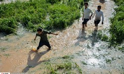 خسارت ۷۰ میلیاردی بارشهای بهاری به بخش کشاورزی خراسانجنوبی