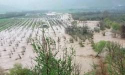 19 هزار میلیارد ریال غرامت سیل به خسارت دیدگان بخش کشاورزی پرداخت شد