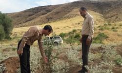 توسعه باغات در 5 هزار هکتار از اراضی لرستان