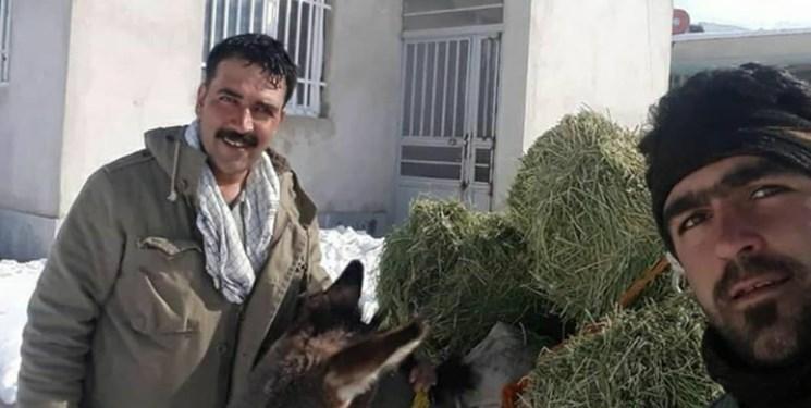 کمک محیط بانان به زیستگاه پلنگ ایرانی در تربت حیدریه