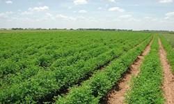 سرمایهگذاری ۳۸۰ میلیارد تومانی در بخش کشاورزی همدان