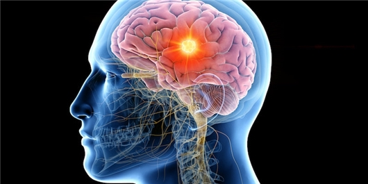 FarsNews Agency Scientists Decode How the Brain Senses Smell