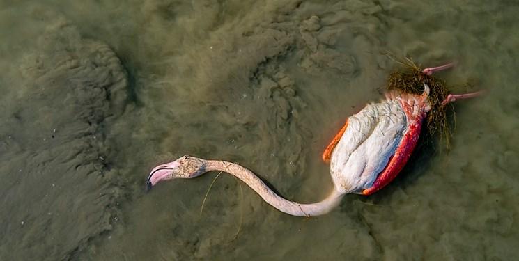 کشف راز مرگ مشکوک 20 هزار پرنده مهاجر در میانکاله/ پای یک تسویه حساب در میان بود