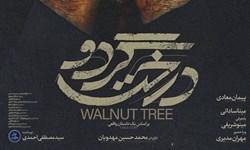 فیلمهای فجر ۳۸ | تیزر فیلم سینمایی «درخت گردو»