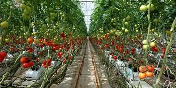 پیشرفت فیزیکی ۷۵ درصدی گلخانه گوجهفرنگی در دامغان