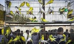 کشف 300 قطعه پرنده کمیاب در زاهدان