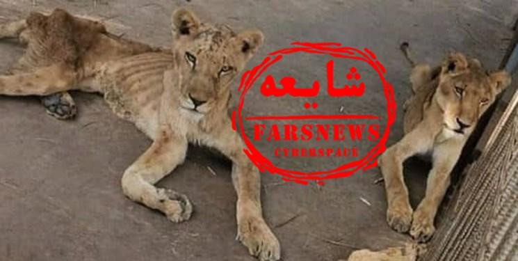 شایعهپراکنان شیرها را از سودان به مشهد آوردند
