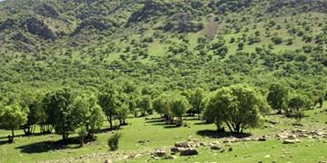 «جهش تولید» در منابع طبیعی استان کرمانشاه/ امسال جنگلکاری به 2 هزار هکتار میرسد