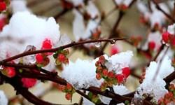فیلم| بارش برف بهاری در کرمانشاه