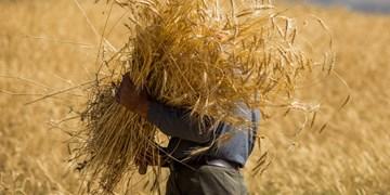 92 میلیارد تومان از مطالبات کشاورزان گندمکار استان مرکزی پرداخت شد
