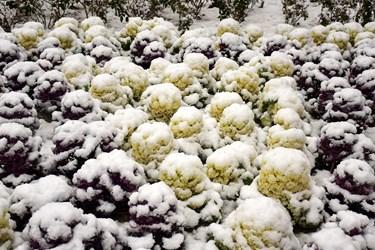 «برف» زمستانی بجنورد