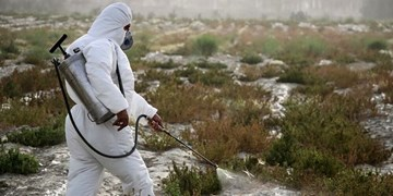 سمپاشی اراضی کشاورزی لاسجرد برای مقابله با ملخها