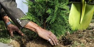 درختکاری در ۱۱ هزار و ۲۰۸ هکتار از اراضی استان سمنان