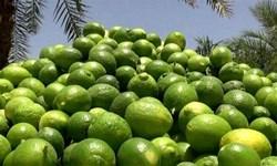 پیشبینی برداشت ۱۳۰ هزار تن لیموترش از باغات قیروکارزین