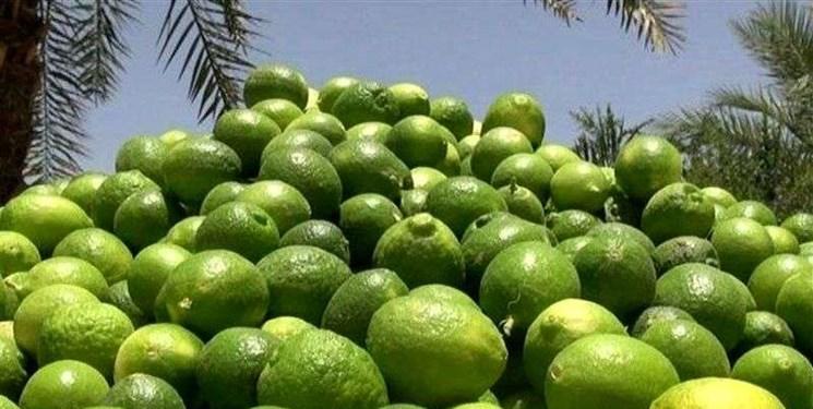 توزیع لیموی لیسبون جهرم در نقاط مختلف  کشور