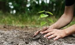 توزیع 6 هزار اصله نهال میان چادگانیها به مناسبت روز درختکاری