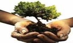 داستان کاشت یک میلیون درخت در تبریز/ تصمیماتی که نمی توانیم اجرا کنیم