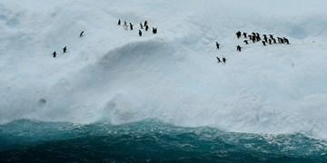 قطب جنوب 6 برابر سریعتر ذوب میشود