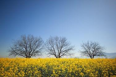بهار در «گلستان»