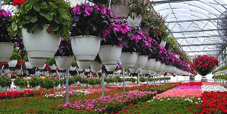 کرونا به جان گلها افتاد/ خسارت سنگین به صنعت گل و گیاه محلات