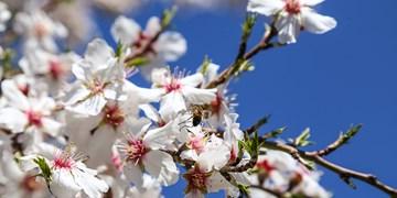 «امید»، رمزآلودترین دستاورد «بهار»/ ساقیا آمدن عید مبارک بادت...