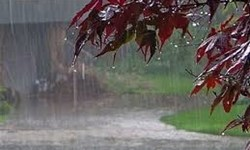 آغاز بارش باران در خراسان رضوی از فردا/ بیشترین میزان وزش شدید باد در نیشابور و بردسکن