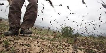 372 میلیون دلار نیاز پاکستان برای جبران خسارت حمله ملخها