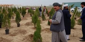 کاشت درخت توسط ترکمنستان در مناطق مرزی افغانستان