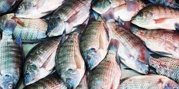 پایان فصل صید ماهیان از دریای مازندران