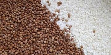 ممنوعیت صادرات مواد غذایی از کشورهای عضو اتحادیه اوراسیا