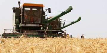 کاشت غلات در بیش از 189 هزار هکتار از اراضی استان قزوین
