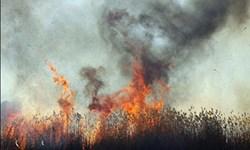 مهار آتشسوزی در نیزارهای گناوه + فیلم