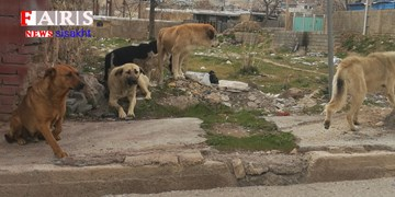 شهر توریستی سیسخت، قلمرو سگهای ولگرد/ سهلانگاری مسئولان در کوران کرونا + تصویر و فیلم