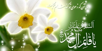 مناجات با امام زمان (عج)/ تا تو هستی به دلم مهر کسی دیگر نیست