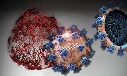بیماران فعلی  کرونا به ویروس جهش یافته آلوده شدهاند