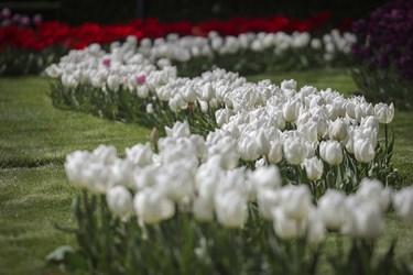 واژهٔ لاله امروزه به گل های پیازداری گفته میشود که نام علمی آنها تولیپا و از راستهٔ سوسن سانان و از تیرهٔ سوسنیان است و کاسه و جام آن تشکیل جامی کامل می دهد/ کرج