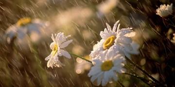 افزایش 15 درصدی بارش در فروردین ماه در گلستان