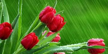 2 سامانه بارشی تازه در راه است/ روزهای آینده روزهای برفی و بارانی است