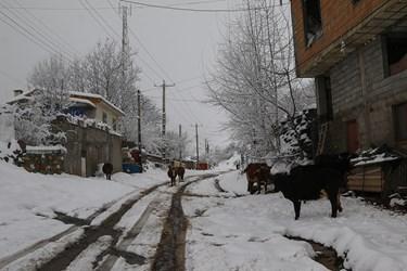 روستای فشکور / مرزن آباد
